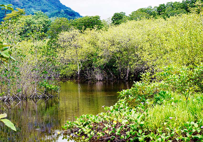 The mangroves have not only flourished they have self propgated and spread
